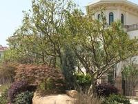 飞龙大名城双拼大别墅,位置好,大花园,工抵直签,1050万!