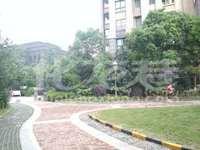 吾悦商圈 绿地峰云汇 开发商精装三房 中间楼层 户型通透 阳光大 环境优美