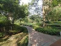 红星威尼斯庄园联排边户,南北入户花园,带两个停车位,带地下室随时看房