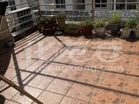 风水师告诉你买顶复——紫阳花园——洋房4 1—市中心独一套—看介绍