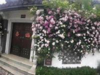 镇江句容汤山鎏园300万级水岸徽派别墅,直达南京市区